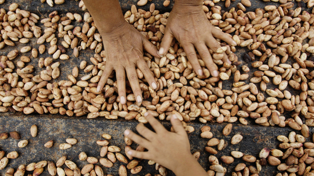 Farmers dry cacao beans in Uchiza, Peru, a file photo from 2008. Researchers are exploring the wild cacao bounty of Peru's Amazon Basin, part of an effort to jump-start the country's premium cacao industry. (AP)