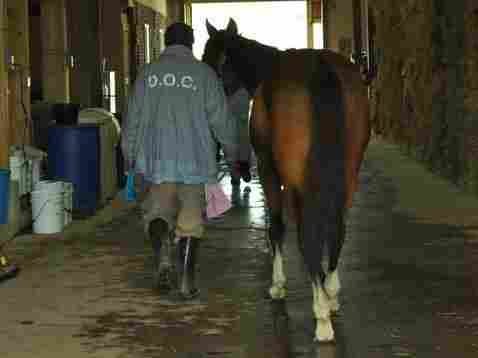 Inmates at Second Chances Farm in Maryland tend to thoroughbreds after their racing days are over.