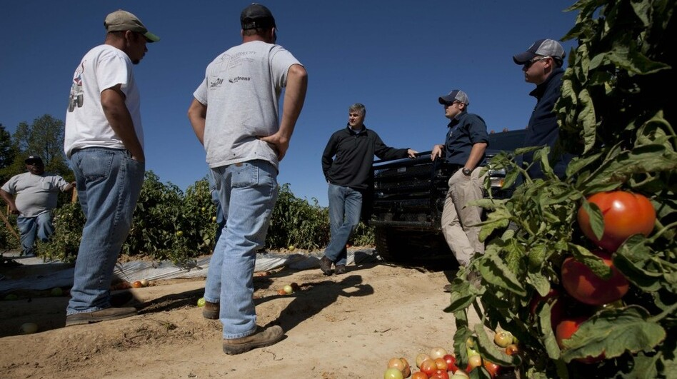State Sen. Scott Beason, R-Gardendale (center) talks with tomato farmers about the new Alabama immigration law on Chandler Mountain in Steele, Ala. Beason, who helped draft the measure, said he was sticking by the law although he would try to find relief for farmers who rely on migrant workers to harvest their crops.  (AP)