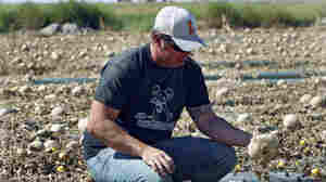 Eric Jensen examines cantaloupe on the Jensen Farms near Holly, Colo., in late September. The FDA recalled cantaloupe grown on the farm after connecting the melons with a deadly listeria outbreak.