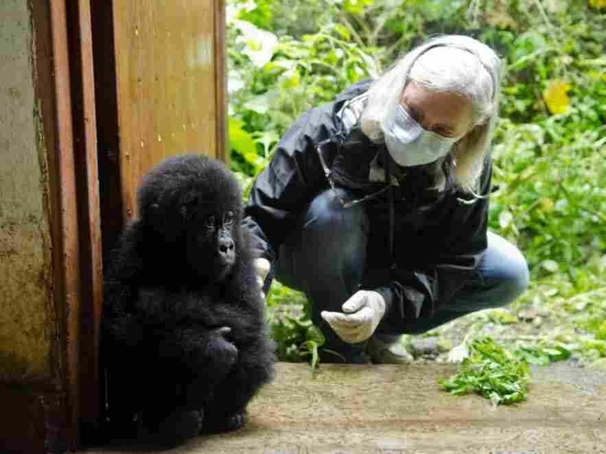 Veterinarian Jan Ramer was a member of the team that examined Shamavu following his rescue.