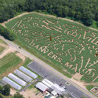 Family Lost In Corn Maze Dials 911 For Help