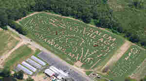 "The family got lost in this corn maze on Connors Farm in Danvers, Mass., but were eventually found close to the exit. The maze was shaped in the theme of the ""Headless Horseman."""