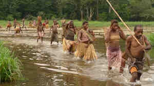 In Bayaka culture, everything from getting married to gathering mushrooms has a music to fit.