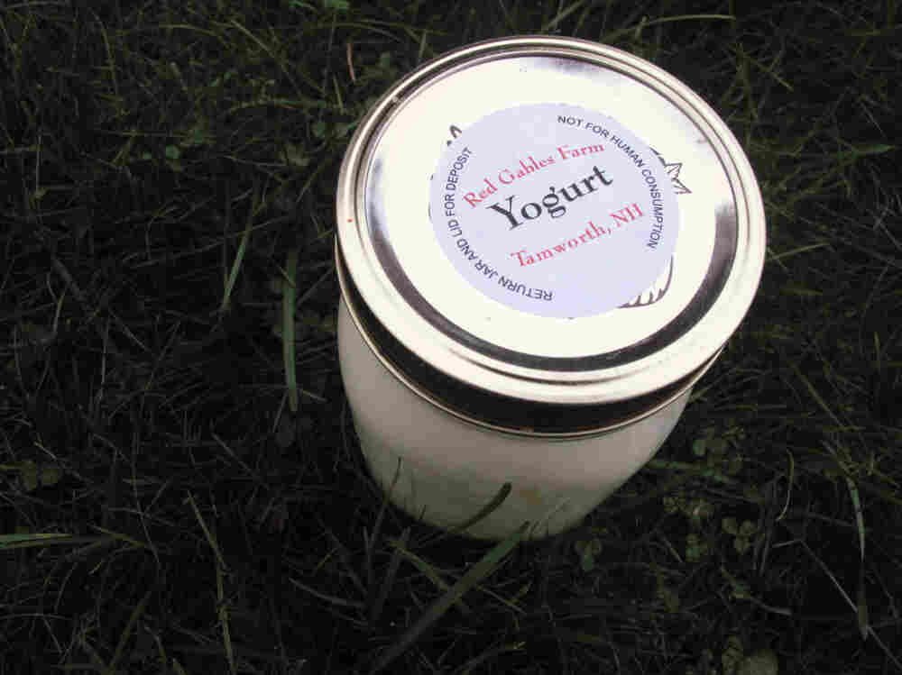 """""""Not for human consumption?"""" Sources tell us this raw milk yogurt was delicious."""