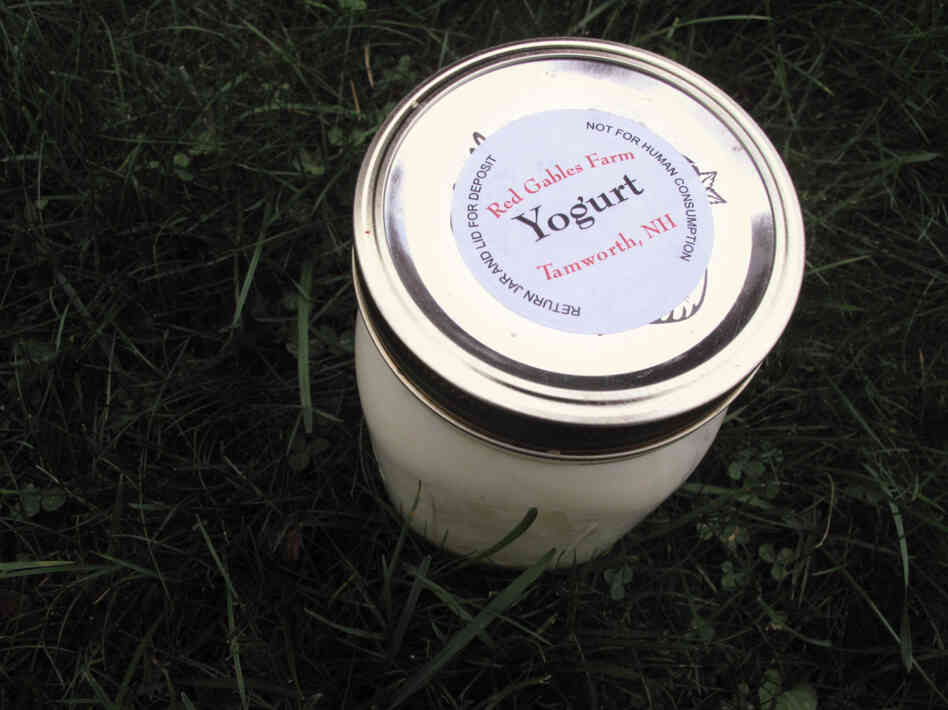 """Not for human consumption?"" Sources tell us this raw milk yogurt was delicious."