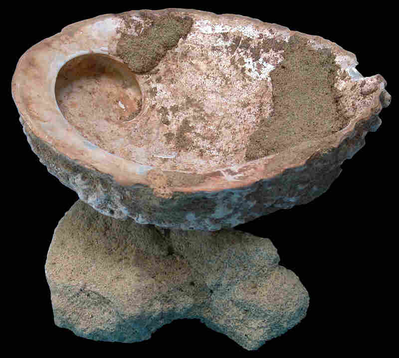 This abalone shell was found with ocher and a grinding stone. The iron oxide was used as a pigment to paint bodies and walls, as well as to thicken glue.