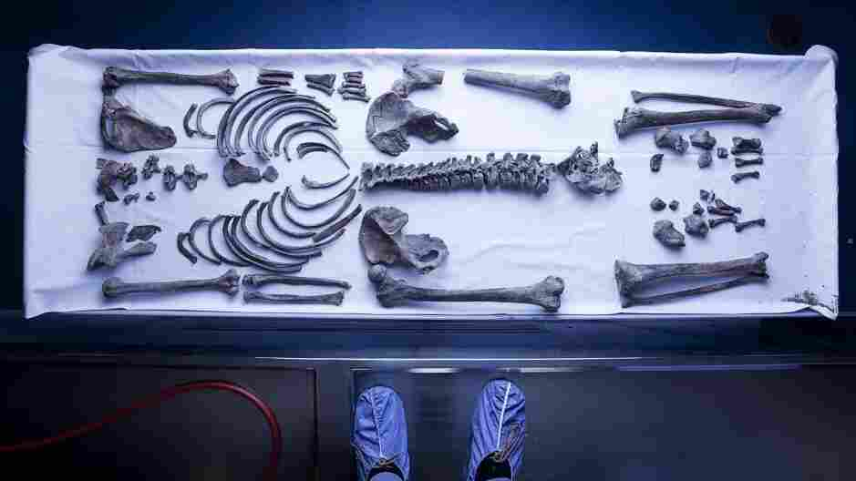 These skeletal remains exhumed from an old prison cemetery are now confirmed as the bones of outlaw legend Ned Kelly.