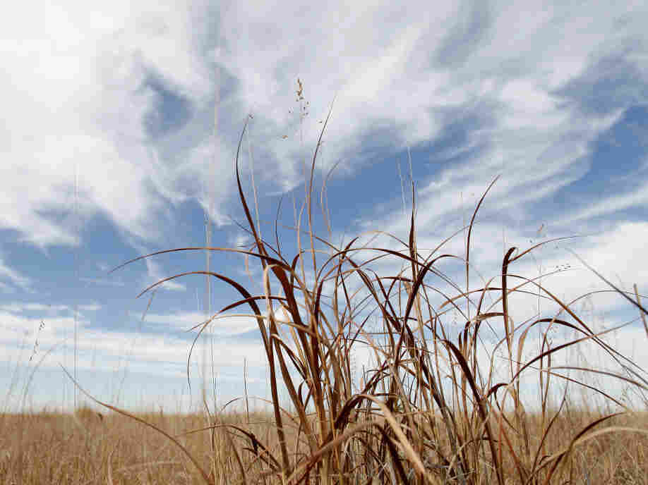 Mixed grasses growing in a parcel of land enrolled in the Conservation Reserve Program is seen near Tribune, Kan. Millions of acres of CRP nationwide will be returned to farmland.