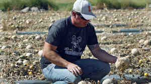 Owner Eric Jensen examines cantaloupe on the Jensen Farms near Holly, Colo., last month.