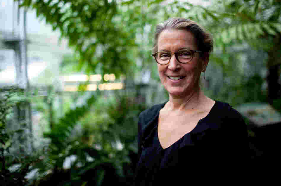 Sarah Mathews, a botanist at Harvard University, says a changing climate on the planet about 12 million years ago led to a burst of new plant species, including cacti and agave.