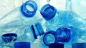 BPA And Behavior: More Questions Than Answers
