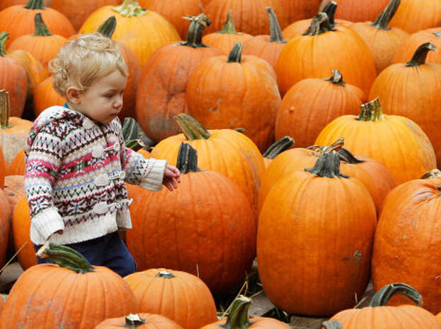 Pumpkin shoppers should be on the look out for a pumpkin with a firm stem, or handle, still attached. Fifteen-month-old Lucy Myers searches for a pumpkin at Patterson Fruit Farm Oct. 18, in Chesterl