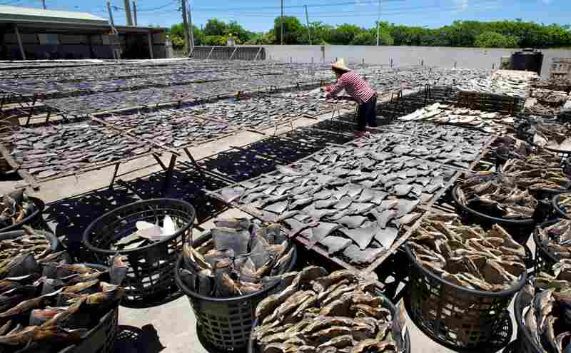 Shark fins are dried in the sun after being cleaned and processed inside the warehouse.