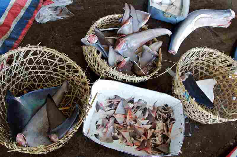 Shark fins and bodies are often frozen and transported to restaurants and markets.