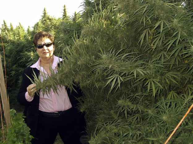 <p>Fresno Sheriff Margaret Mims stands beside a 12-foot tall marijuana plant in Fresno County last month.</p>