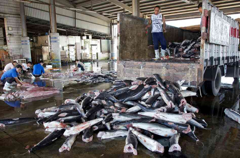 Sharks are unloaded at a processing warehouse in Taiwan.