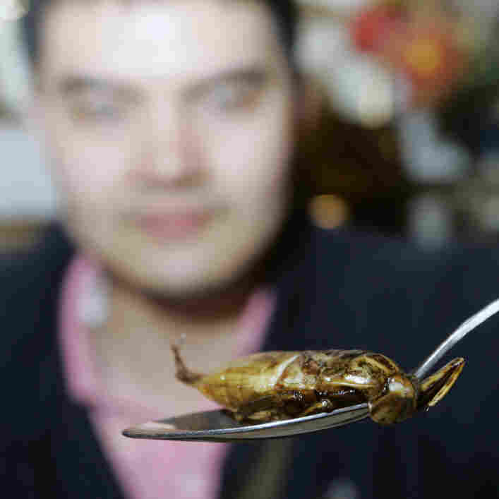 A customer holds up a spoon of deep-fried water bug in a restaurant in Thailand. Insects are a popular food in Thailand and many other countries around the world.