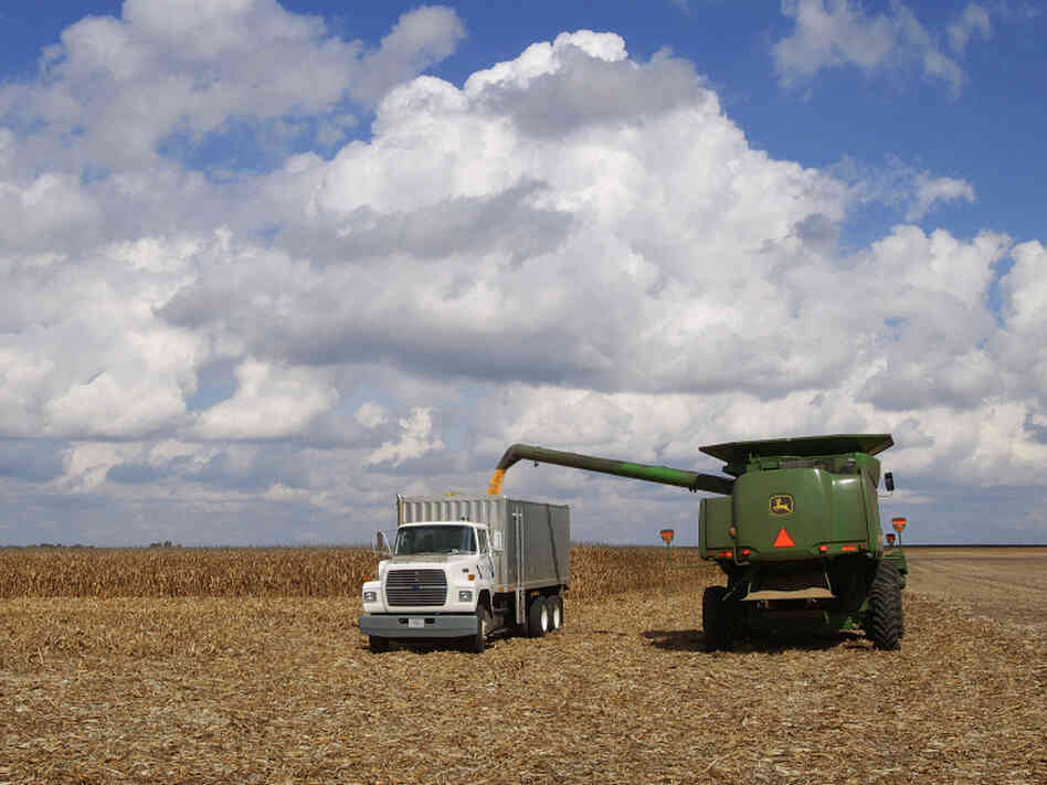 Illinois farmers harvest corn crops near Monticello, Ill. An unseasonably hot summer likely damaged much of this year's corn crop, which means farmers may seek support through their crop insurance.