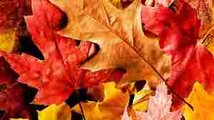 "The National Audubon Society considers fall leaves to be ""natural vitamins"" to use in yards."