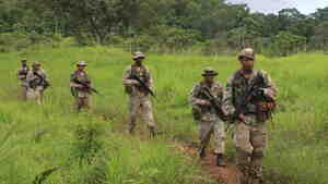 Special forces troops in Belize march through jungle looking for any sign of marijuana or drug smugglers. Drug traffickers have become increasingly active in Belize and other small nations in Central America.
