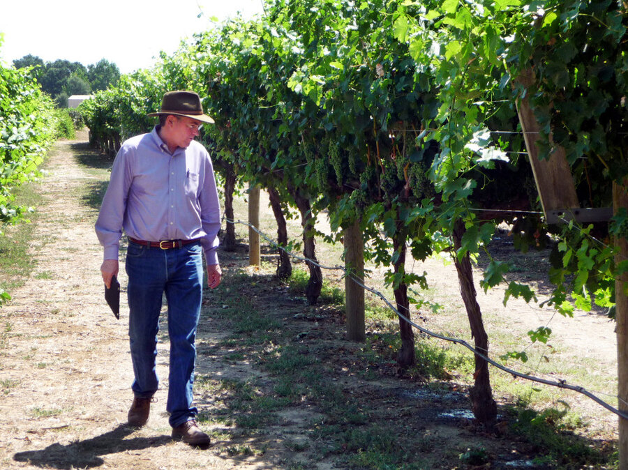 Climate Change Has California Vintners Rethinking Grapes : NPR