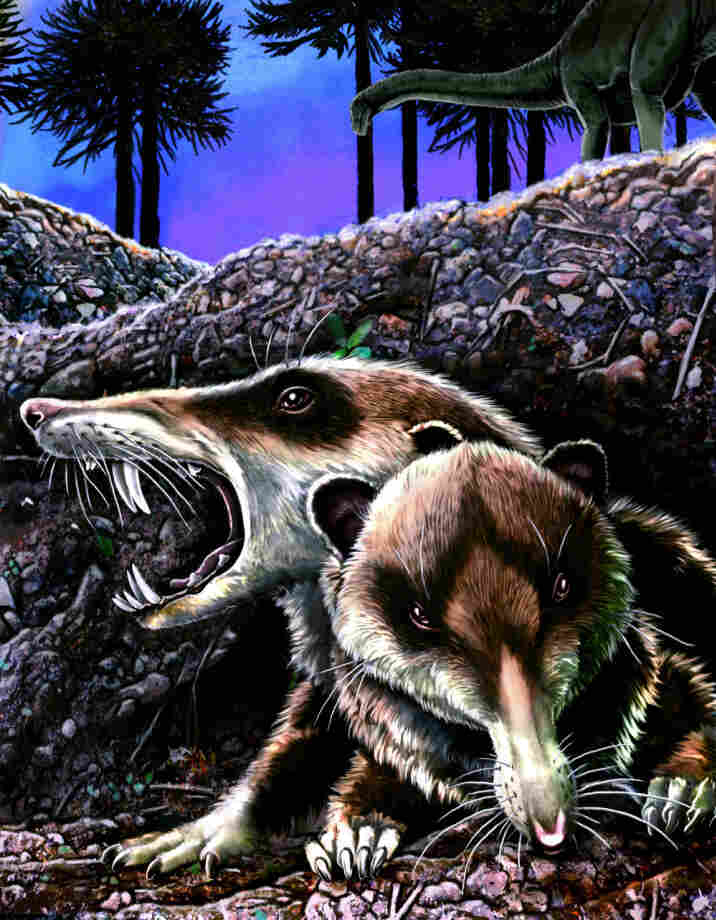 Reconstruction of Cronopio dentiacutus in its native environment at La Buitrera locality, Patagonia, Argentina, during the early Late Cretaceous (approximately 94 Million years ago).