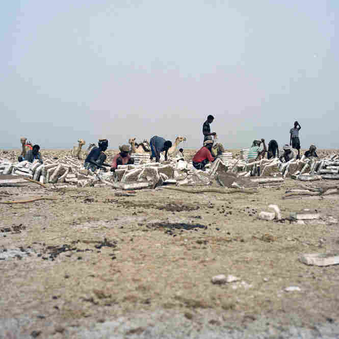 Afar and Tigray salt workers cut and shape blocks of salt from the earth, which will be transported by camel caravan to Mekele in the north of Ethiopia.