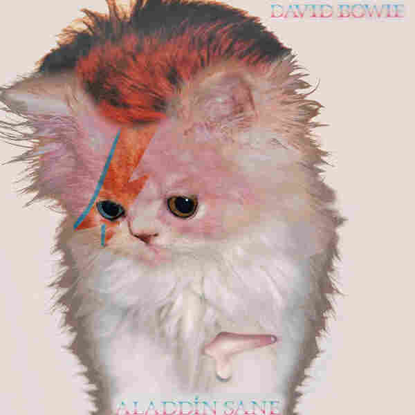 Kitten Covers - Bowie