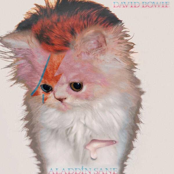 Kitten Covers - Bowie
