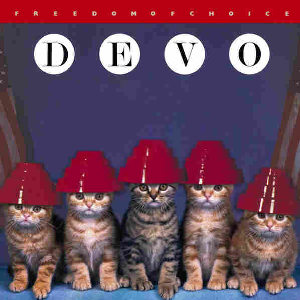 Kitten Covers - Devo