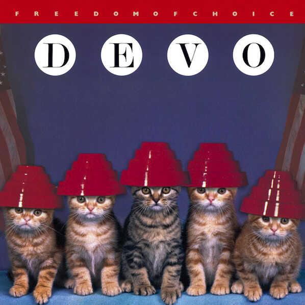 Kitten Covers - Devo