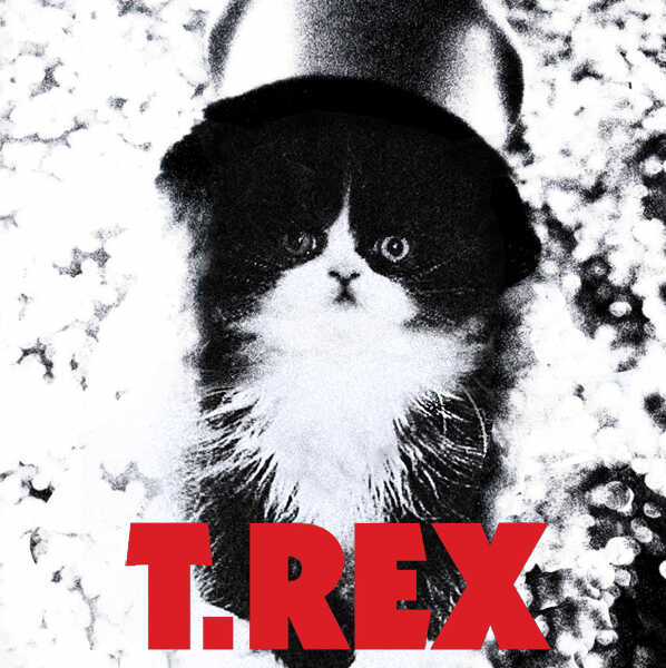 Kitten Covers - T. Rex