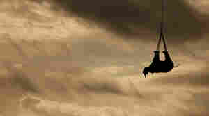 A rhino dangling from a helicopter is transported to a safer home.