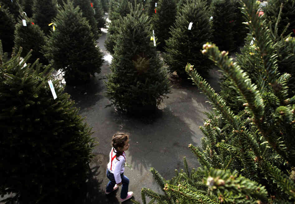 Three-year-old Lauren Roberts explores a displays of Christmas trees for sale at Kiser Christmas trees in Concord, N.C. This is file photo from 2006.