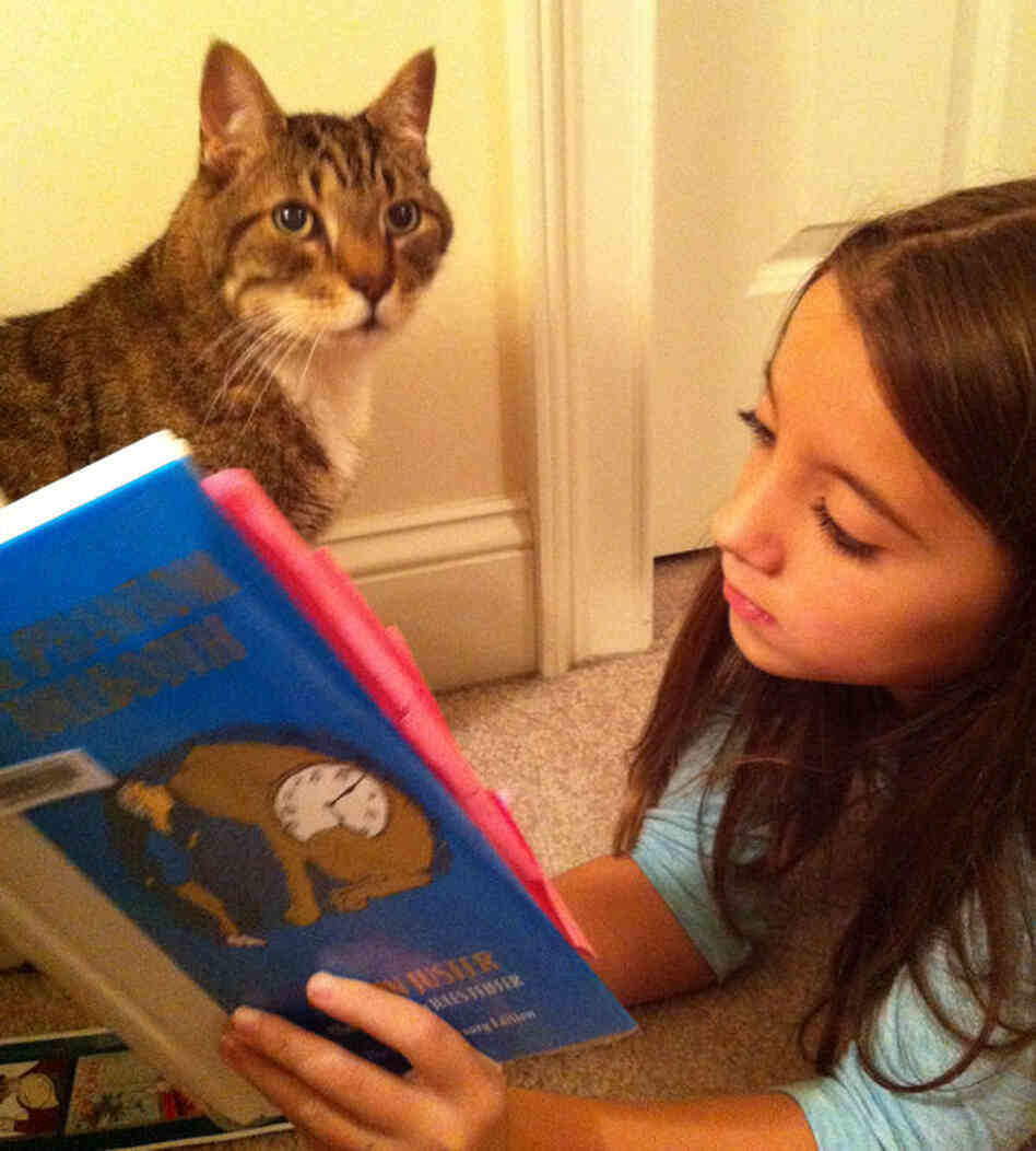 Chilis the cat keeps Isabella Farr, 8, company while she reads.