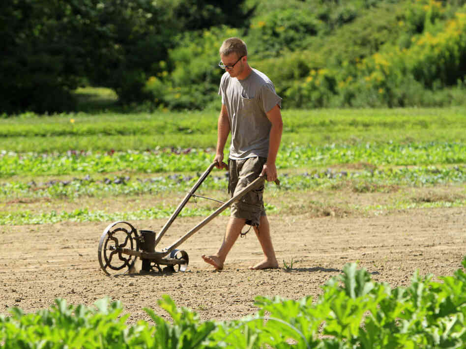 Jameson Small uses a late-1800s seeder to plant lettuce at Tuttle farm in Dover, N.H.  Small is part of a group of young farmers who are taking care of the land as the owners await a buyer.