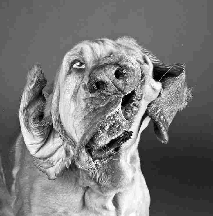 Dog Shaking 2