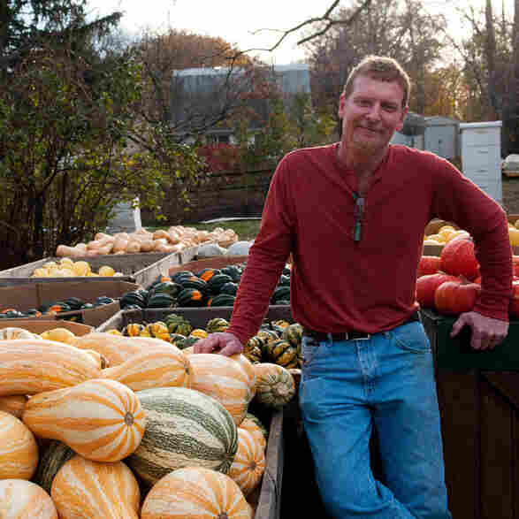 For Thanksgiving, Pumpkins That Won't Be Found In Cans