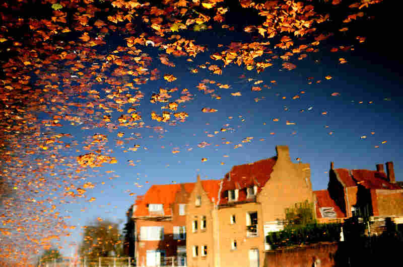 Falling leaves, Bruges, Belgium