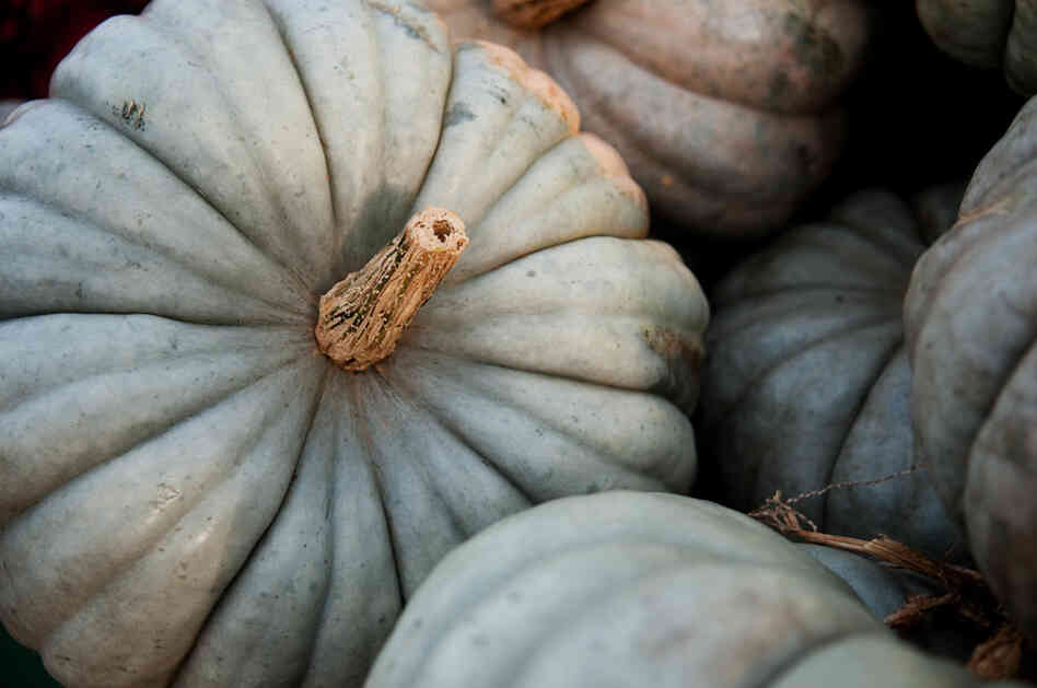 Blue-skinned Jaradale pumpkin has origins in Australia.