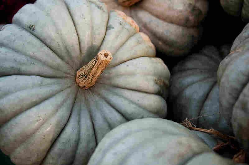 Blue-skinned Jaradale pumpkin has origins in Australia.