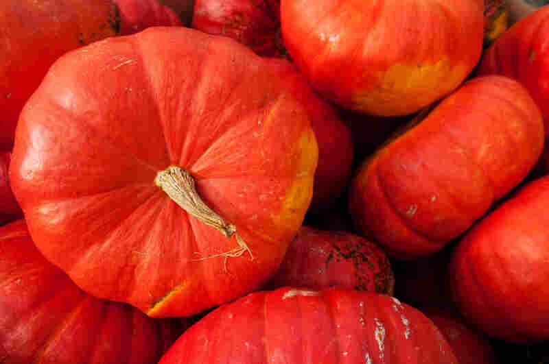 Rouge Vif D'Etampes, a large Cinderlla variety.