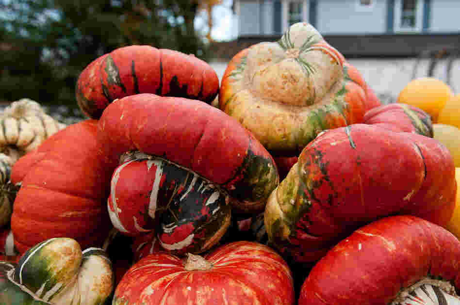 Turban squash, another American variety, is great for roasting.