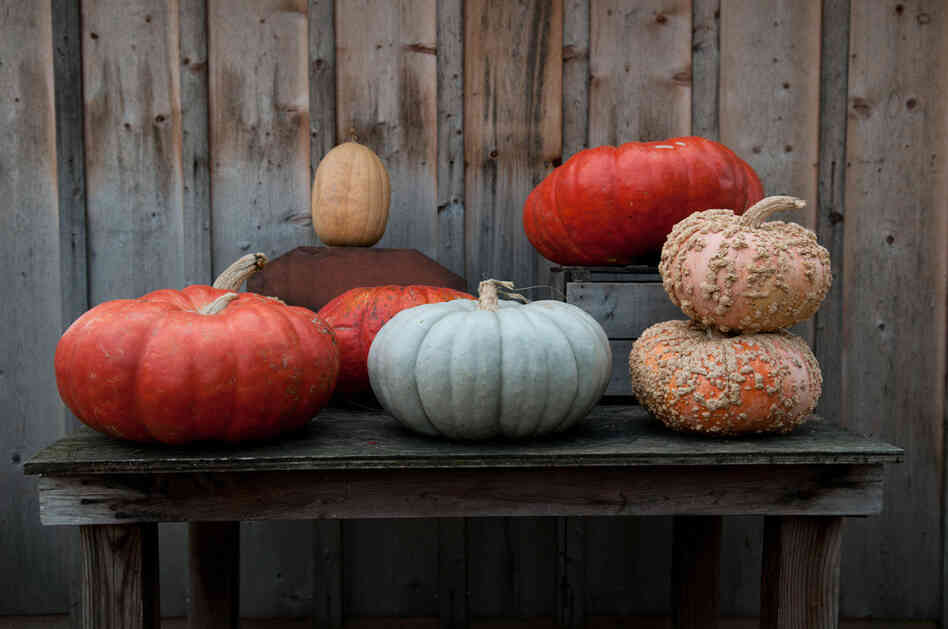Maryland's Comus Market has 38 varieties of pumpkin and squash.