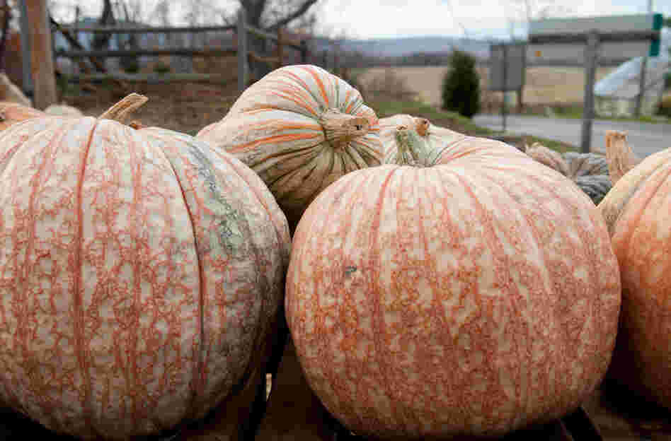Creamsicle pumpkin has honeydew-colored flesh and a cucumber aroma.
