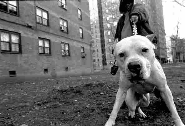 Brooklyn, 2003