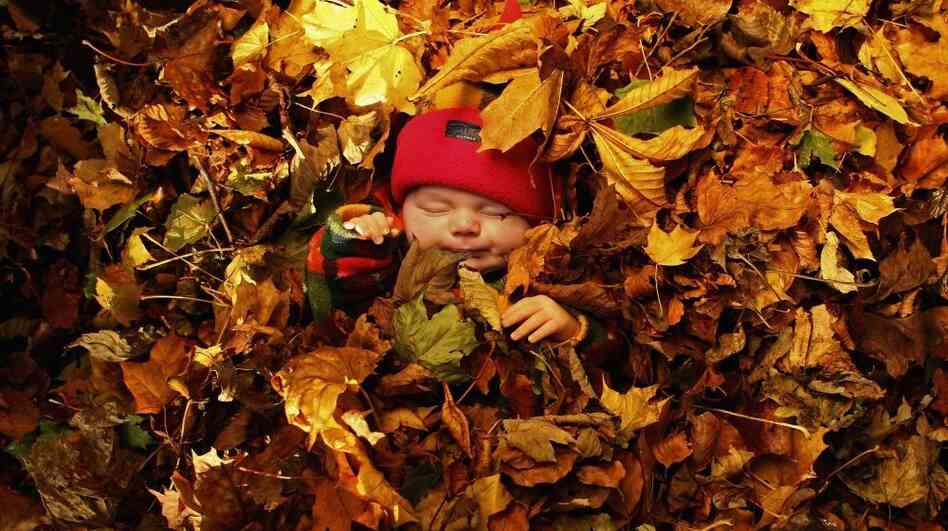 Photo illustration: fallen autumn leaves form a backdrop for a portrait of a sleeping baby in Levengrove Park, November 1, 2006 in Dumbarton, Scotland.