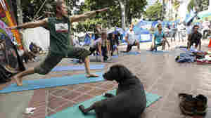 At Occupy Los Angeles: Protesters, and one dog, take part in a yoga session.