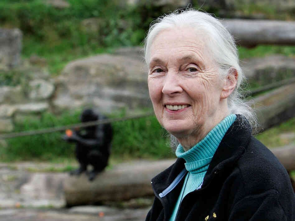 Jane Goodall poses for a photo at Taronga Zoo on October 11, 2008 in Sydney, Australia.